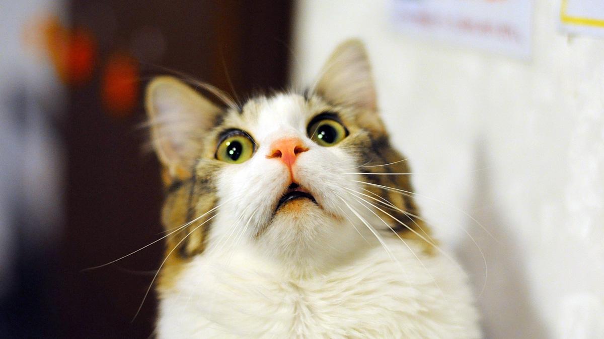 kitten opening eyes