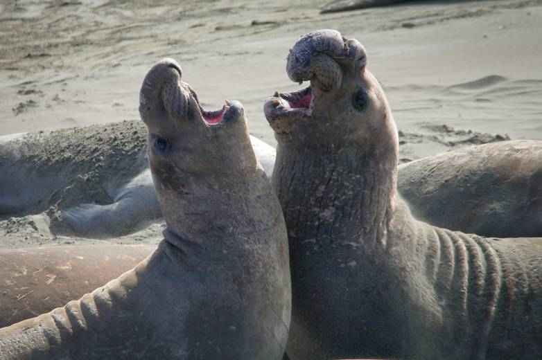 Seal Selfie Warning