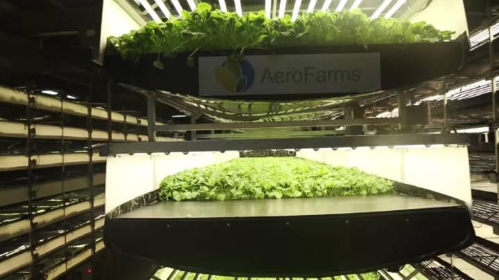AeroFarm Vertical Farming World Largest Project