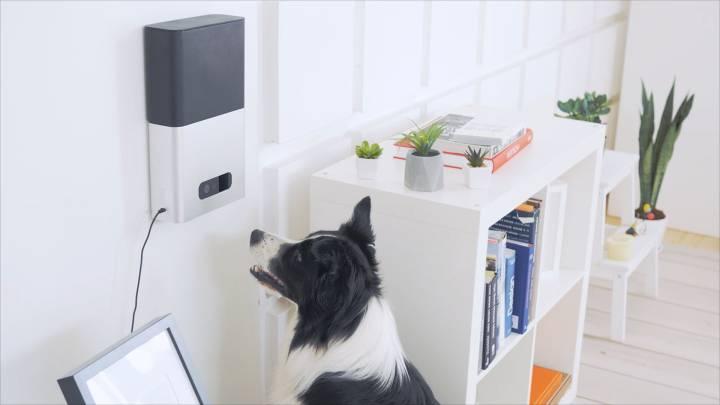 Dog Camera With Treat Dispenser