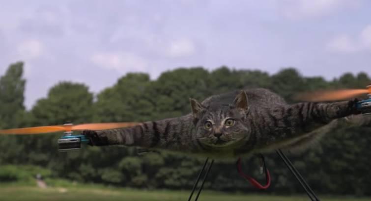 Dead Cat Drone Video