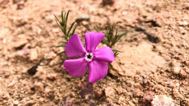 iphone-7-plus-flower