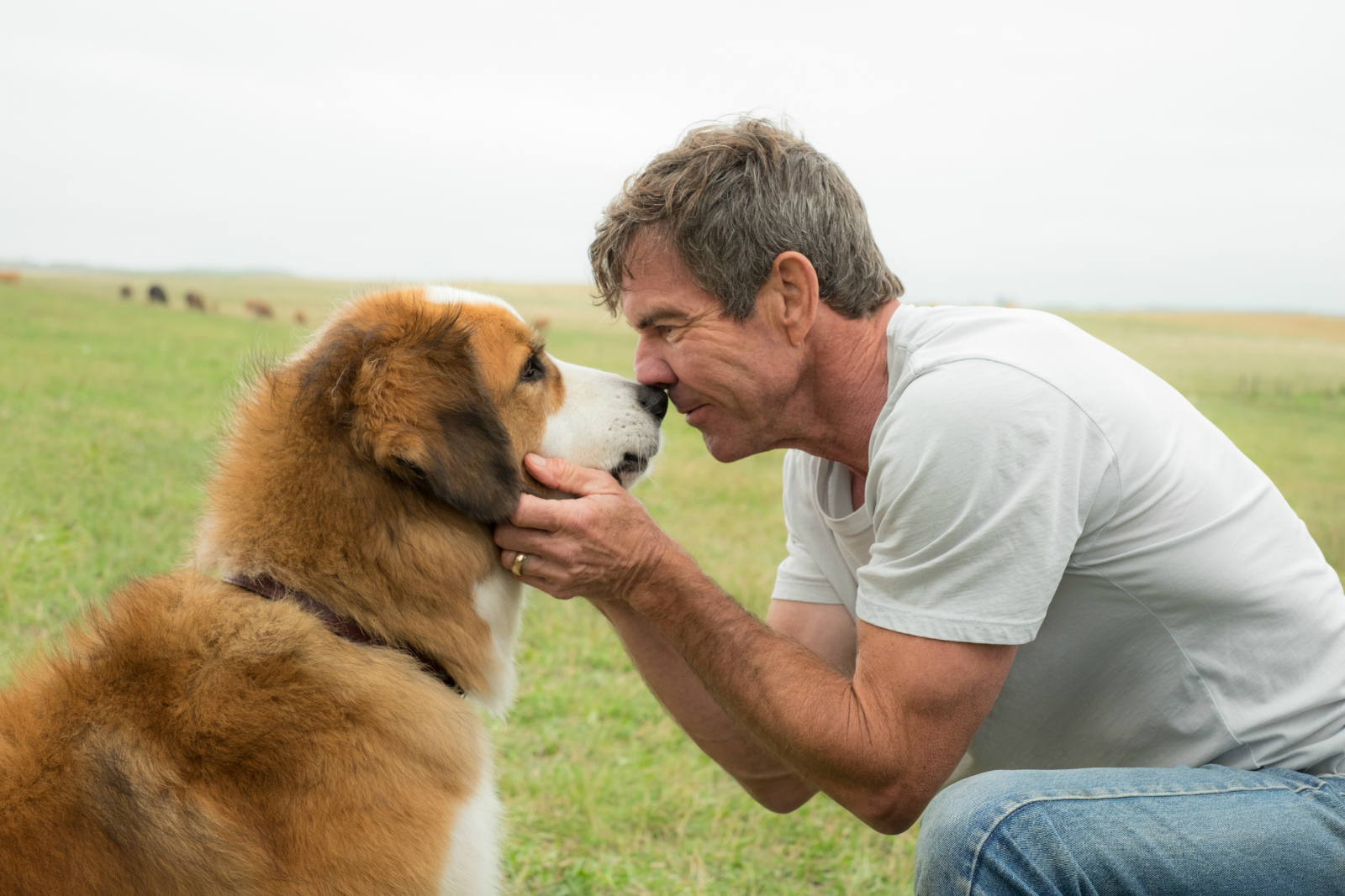 A Dog's Purpose Boycott
