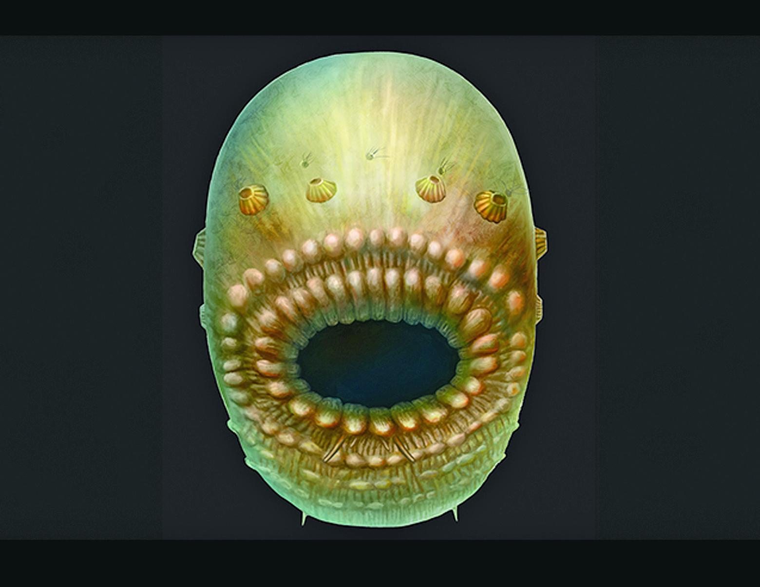 oldest human ancestor
