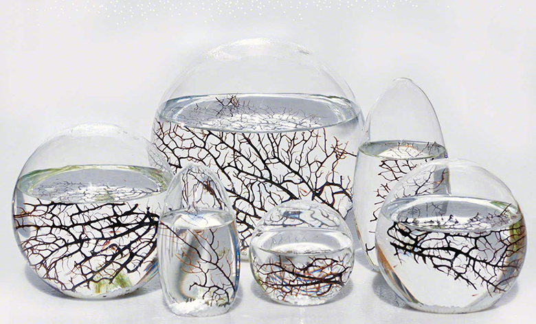 Ecosphere Shrimp Amazon