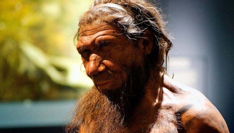 neanderthal differences