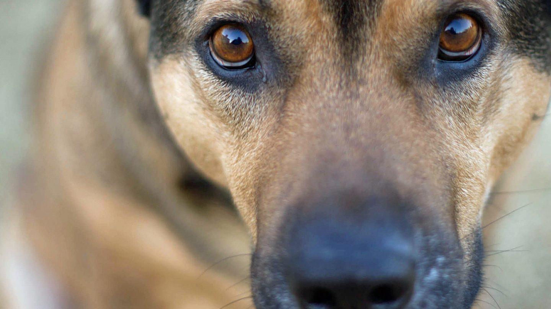 dog personality training