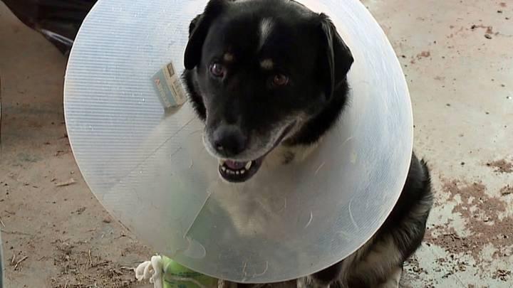 tornado dog