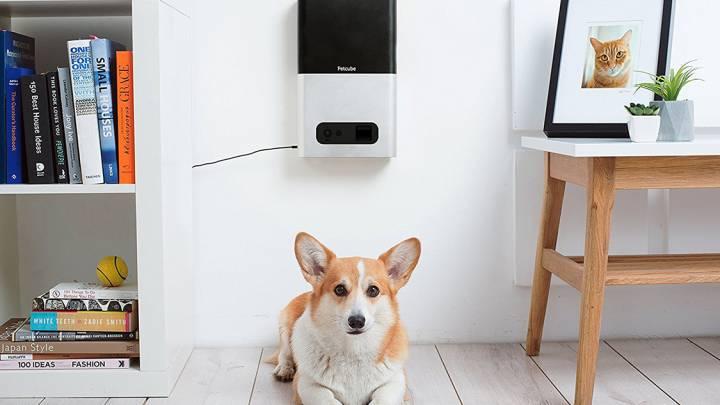 Pet Camera And Feeder