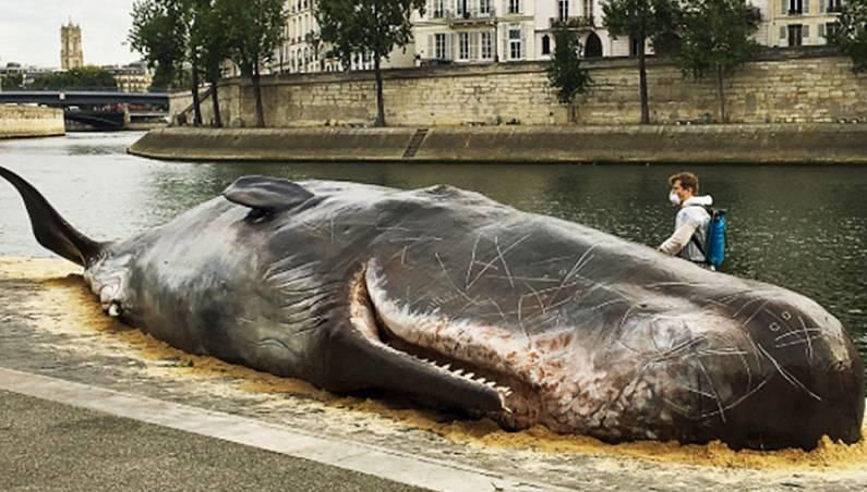 dead whale paris