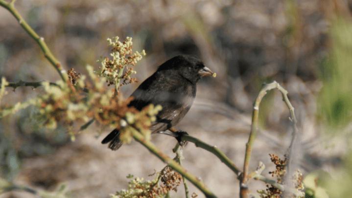 bird evolution