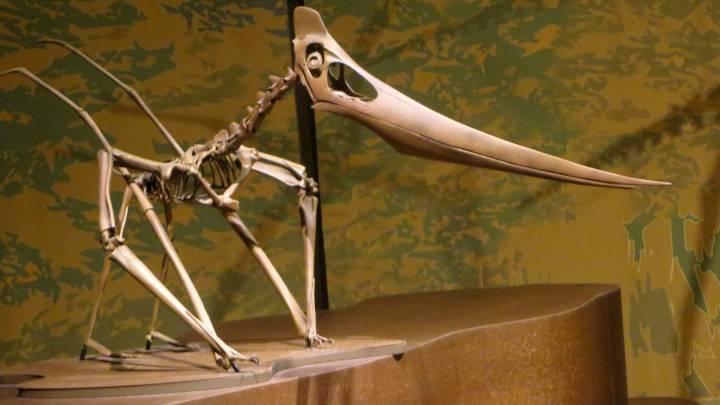 pterosaur eggs