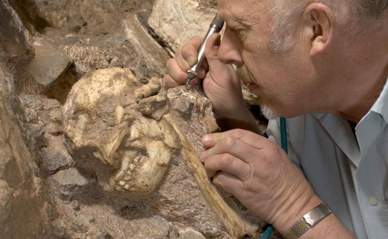 human ancestor