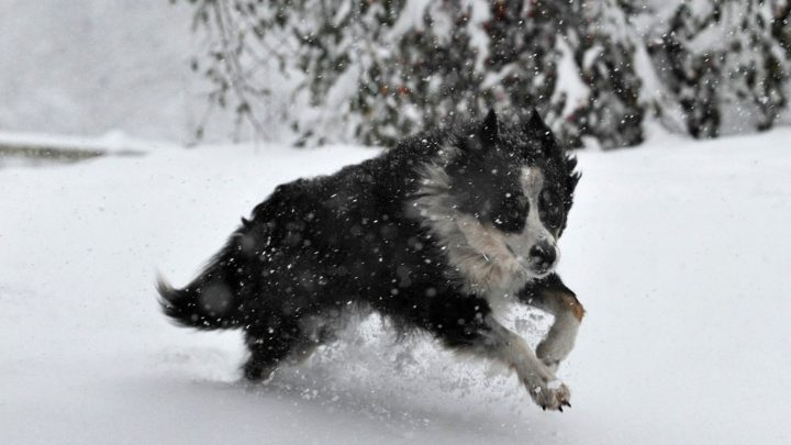 How To Protect Dog Paws In The Winter