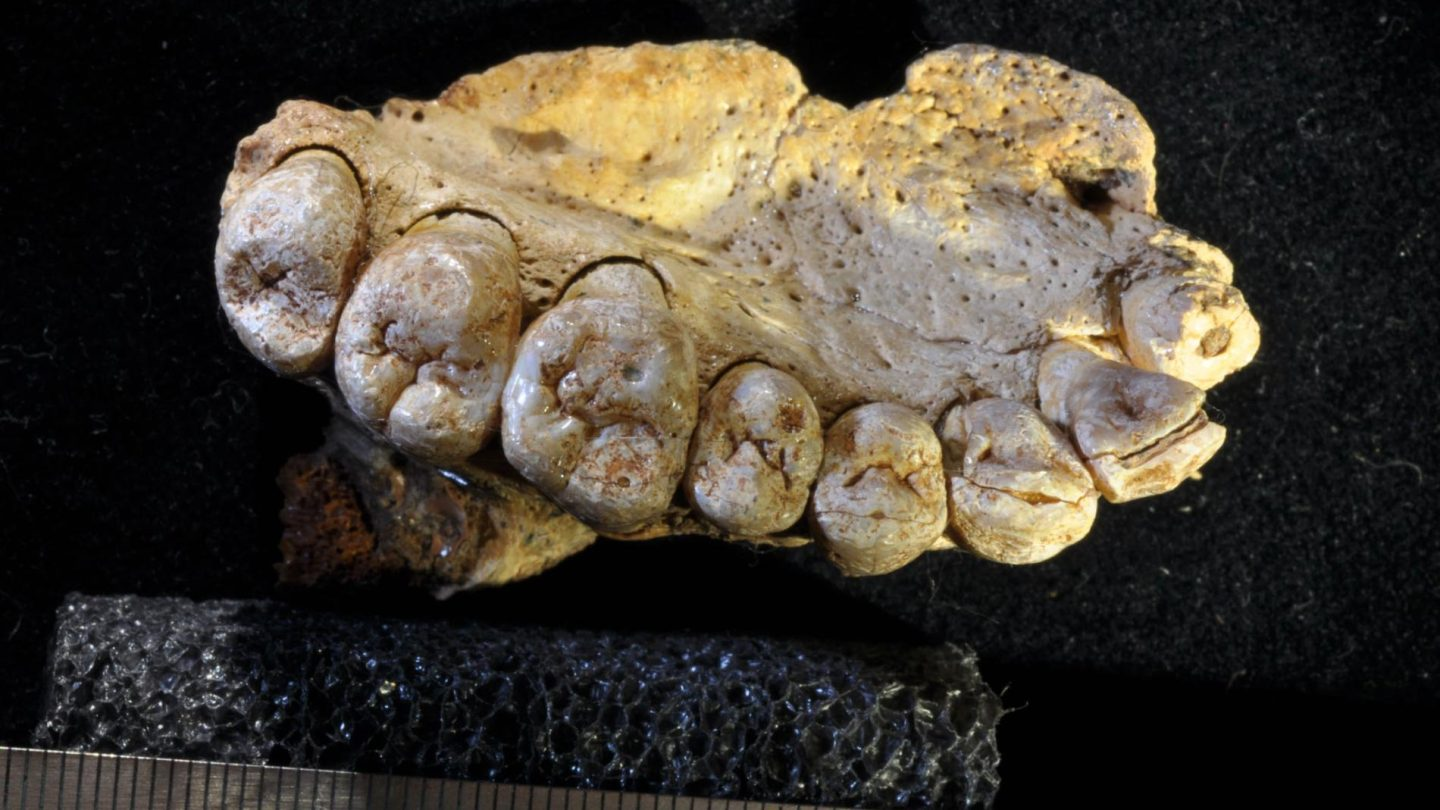 Oldest Human Fossil Outside Africa
