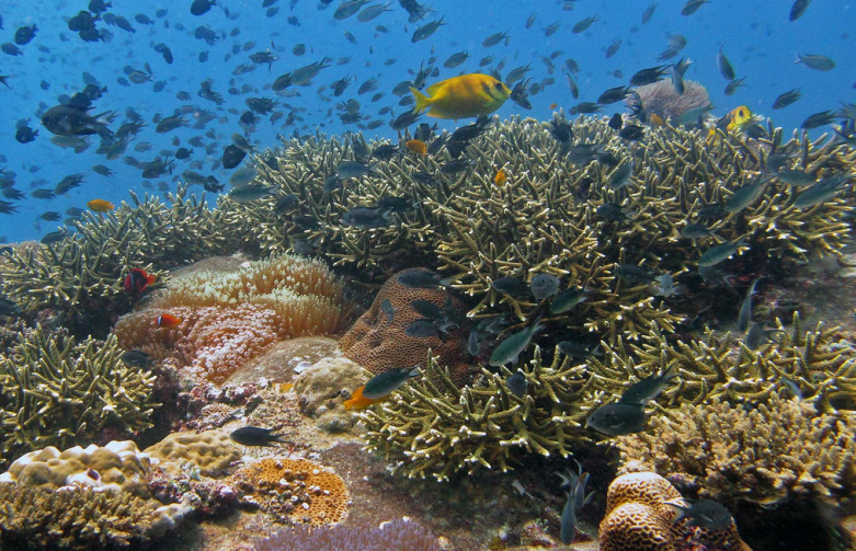 coral reef climate change