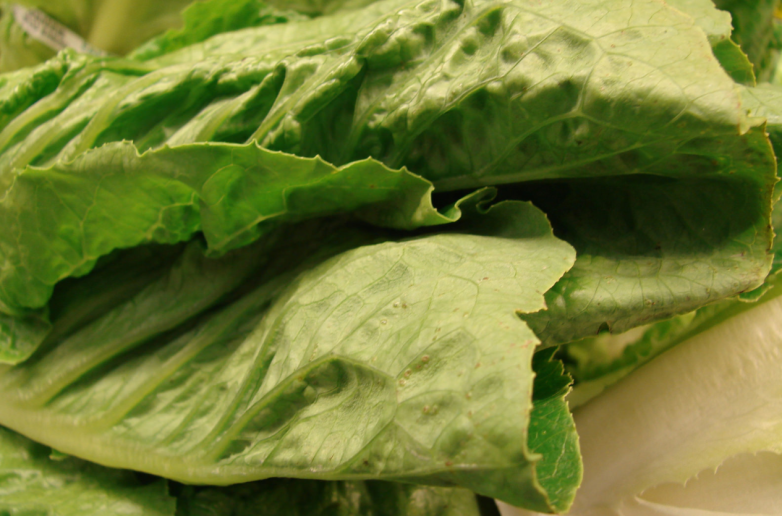 e coli romaine lettuce