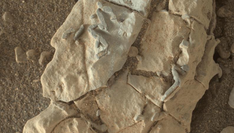 mars fossils