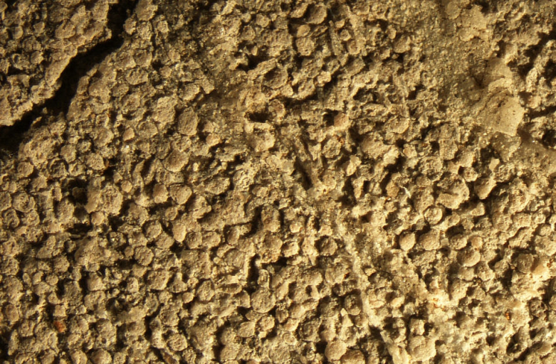limestone fossils