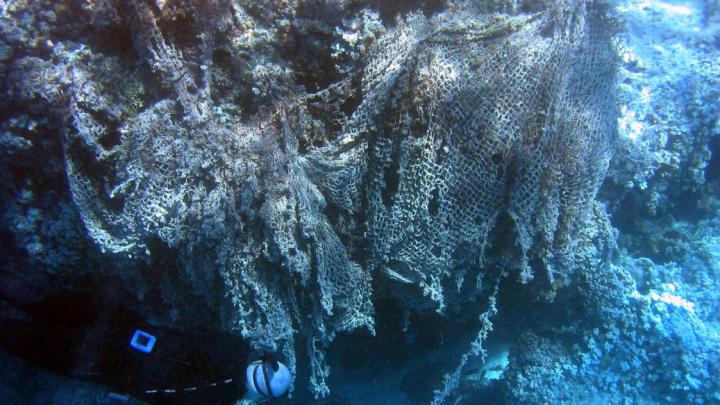coral reef plastic