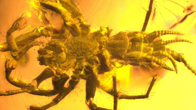 ancient arachnid