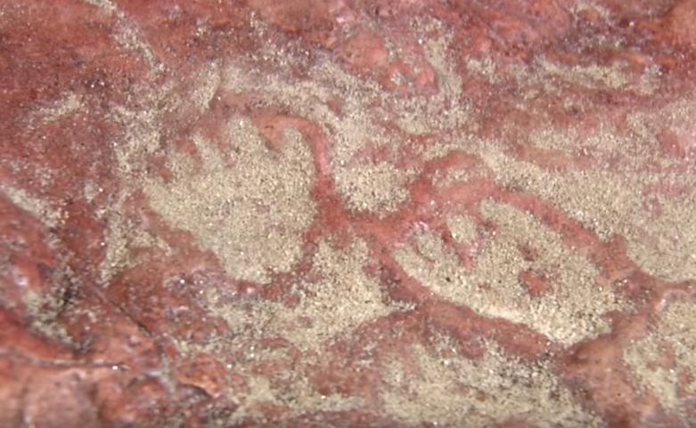 nasa dinosaur tracks