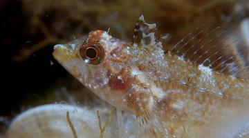 fish eye flashlight