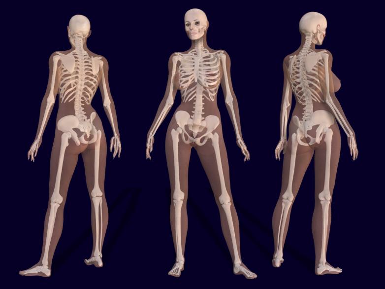 new human organ