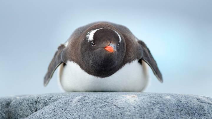 penguin super colony