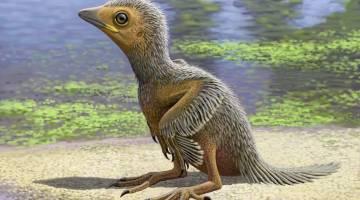 baby bird fossil