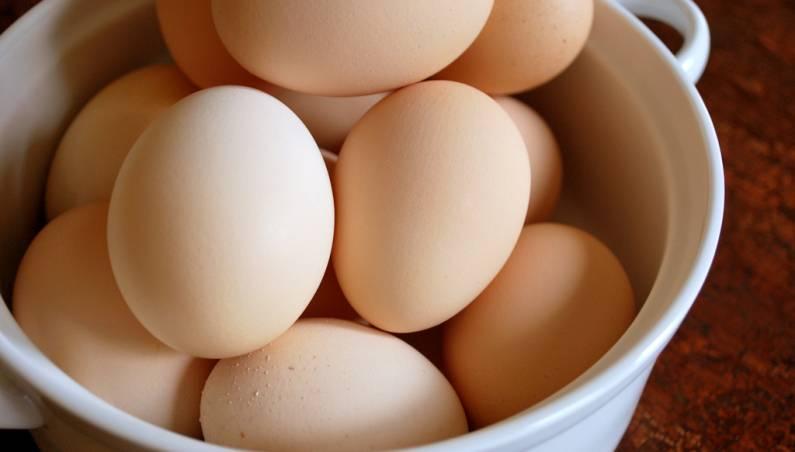 salmonella eggs