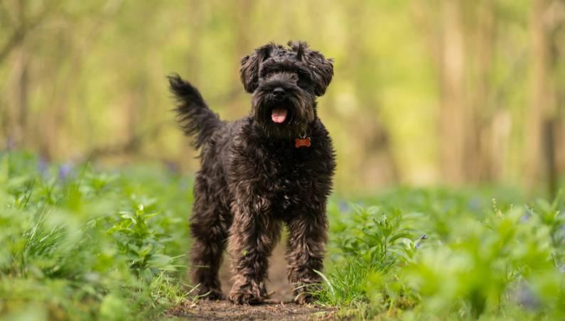 amazon dog thief