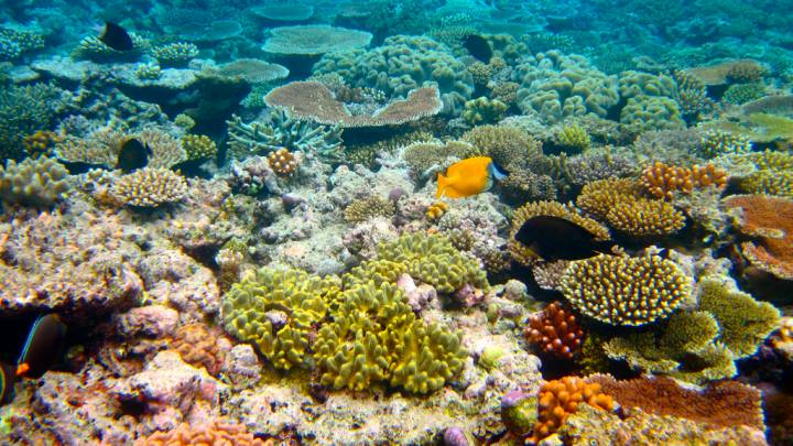 coral reef sunscreen