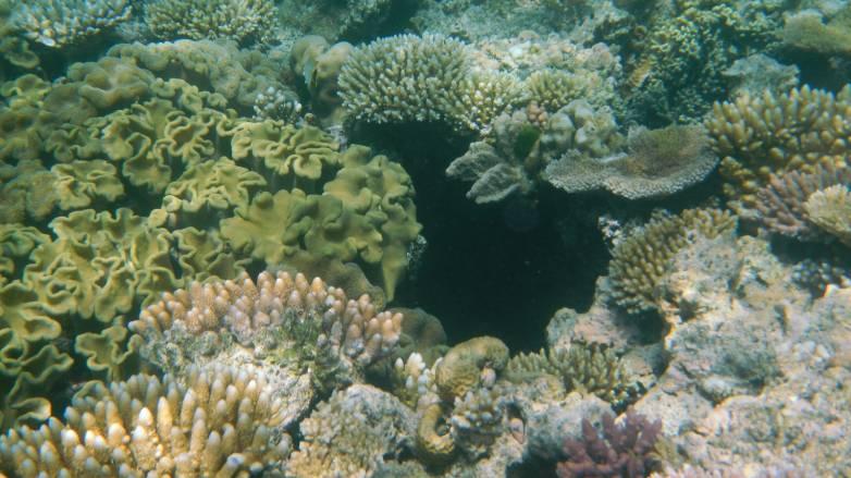 great barrier reef sound