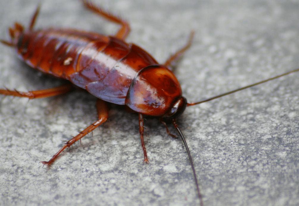 bug bomb risks