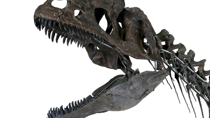 dinosaur auction
