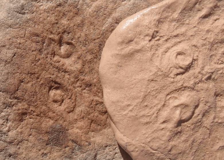 obama fossil