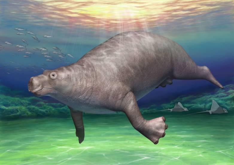 fossil bone hippo