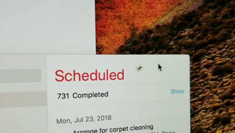 iMac bug