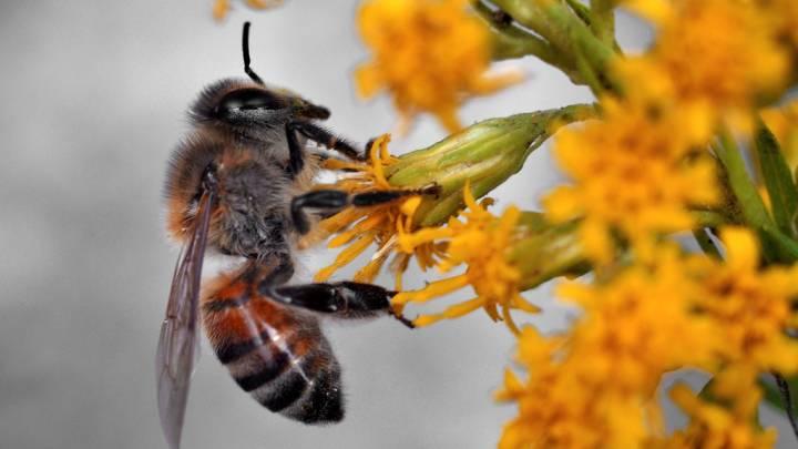 bee herbicide