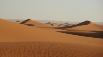 sahara energy farm