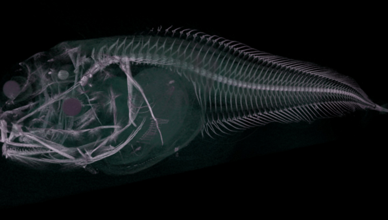 new fish species