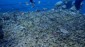 coral reef recovery
