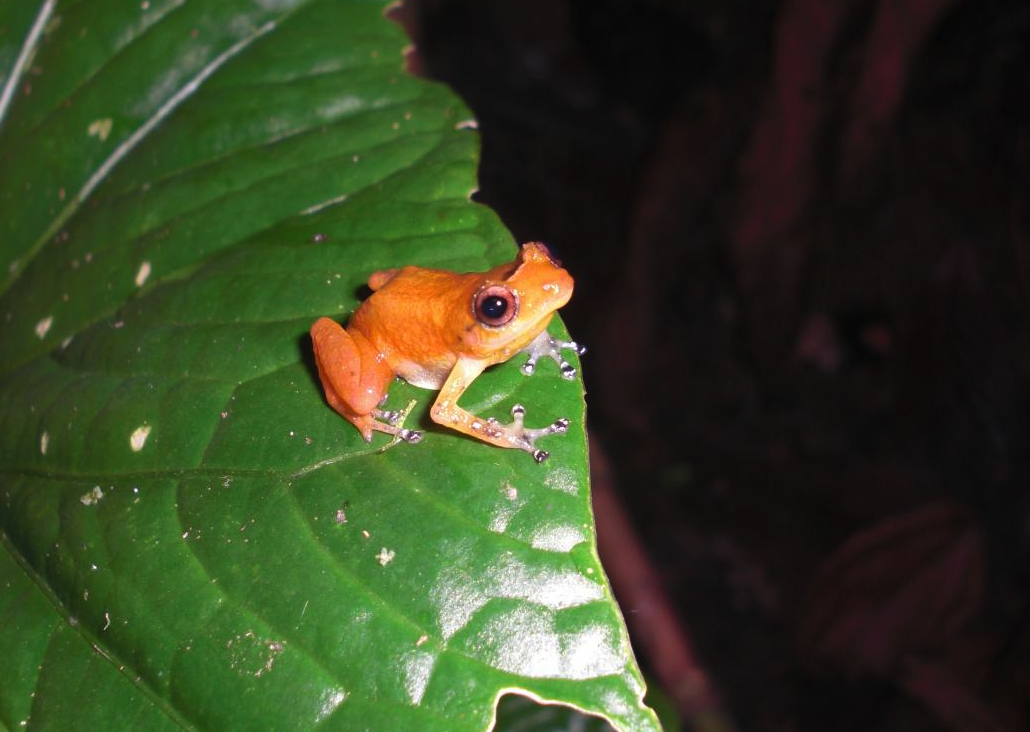 frog fungus