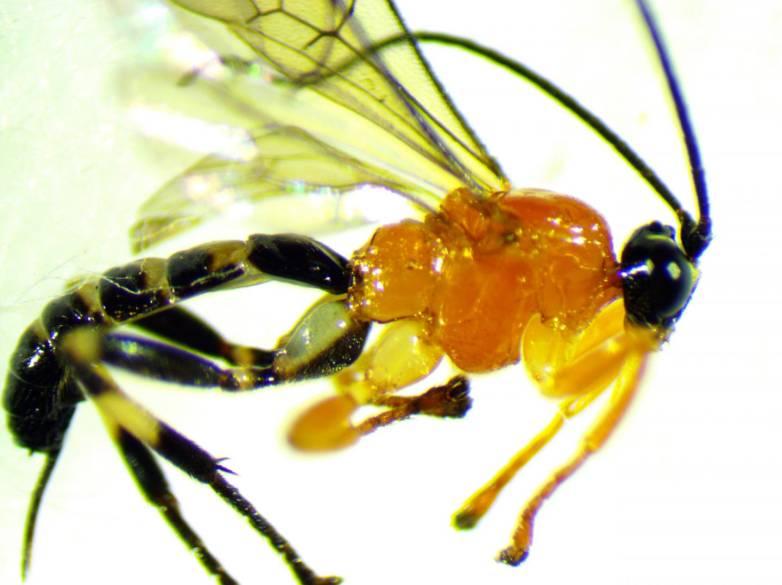 wasp spider zombie