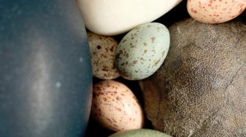 bird egg color