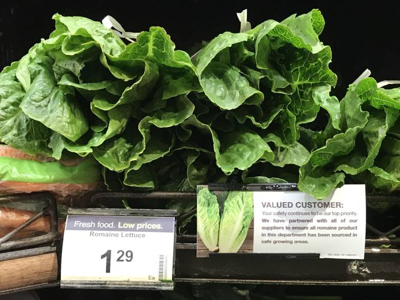 romaine lettuce e coli
