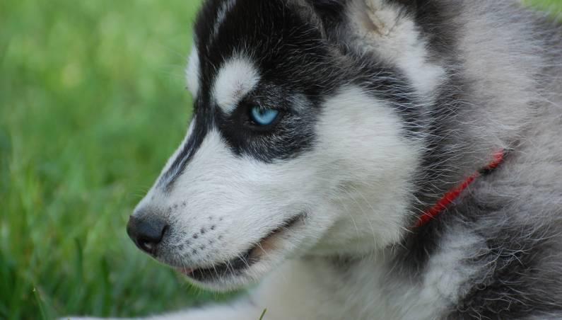 dog cancer detection