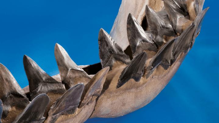 megalodon extinction