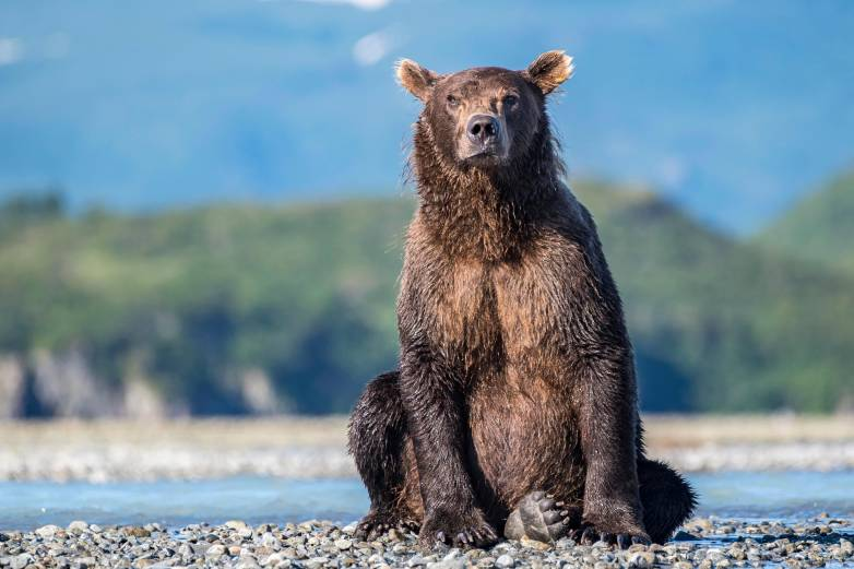 lost boy bear